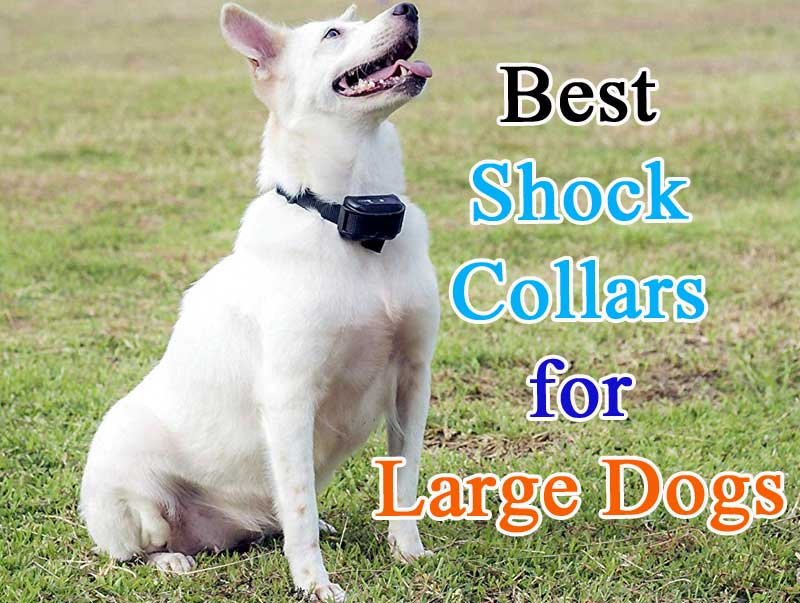 shock collars for large dogs